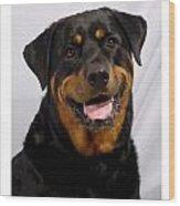Rottweiler 96 Wood Print