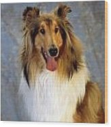 Rough Collie Dog Wood Print