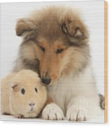 Rough Collie Pup And Yellow Guinea Pig Wood Print
