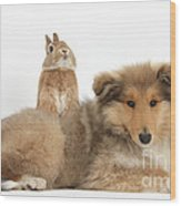 Rough Collie Pup With Sandy Netherland Wood Print