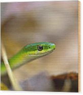 Rough Green Snake Wood Print