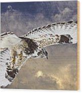 Rough Legged Hawk In Flight Wood Print