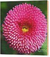 Round Pink Flower Wood Print