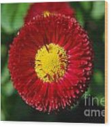 Round Red Flower Wood Print