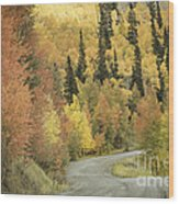 Routt National Forest Wood Print