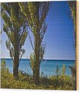 Row Of Cypress Trees At Point Betsie In Michigan No.0924 Wood Print