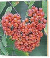 Rowan Berries Wood Print
