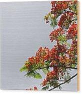 Royal Poinciana Tree Wood Print