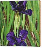 Royal Purple Iris Wood Print