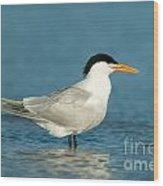 Royal Tern Wood Print