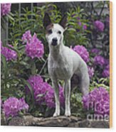 Ruby In The Garden Wood Print