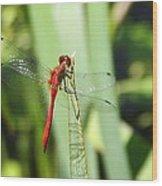 Ruby Meadowhawk Dragonfly Wood Print