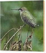 Ruby On The Perch Wood Print