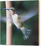 Ruby Throated Hummer In Flight Wood Print
