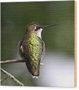 Ruby-throated Hummingbird - Hummingbird - Content Wood Print