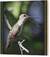 Ruby-throated Hummingbird - Just Beautiful Wood Print