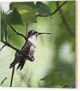 Ruby-throated Hummingbird - Shade Wood Print