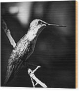 Ruby-throated Hummingbird - Signature Wood Print