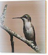 Ruby-throated Hummingbird - Totally Innocent Wood Print
