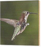 Ruby-throated Hummingbird - Twirling Wood Print