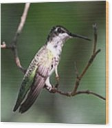 Ruby-throated Hummingbird - Hanging Low Wood Print