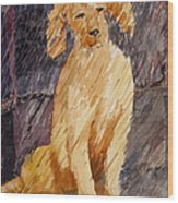 Rudy In The Rain Wood Print
