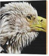 Ruffled Bald Eagle Wood Print