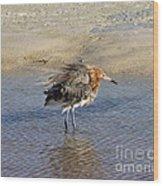 Ruffled Reddish Egret  Wood Print