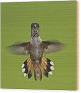 Rufous Hummingbird Selasphorus Rufus Wood Print
