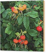 Rugosa Rose With Rose Hips Wood Print