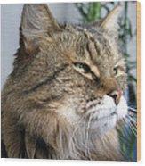 Runcius- My King Kitty Enjoying The Sunshine Wood Print