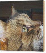 Runcius- The King Kitty Wood Print