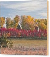 Rural Country Autumn Scenic View Wood Print