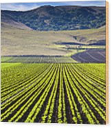 Rural Landscape With Planted Crops Wood Print by David Buffington