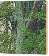 Rural Trees Close Up Wood Print