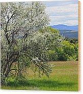 Russian Olive Wood Print