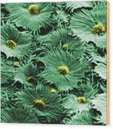 Russian Silverberry Leaf  Wood Print