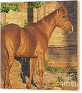Rusty Standing Proud Wood Print