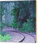 S Curve In The Forest Wood Print
