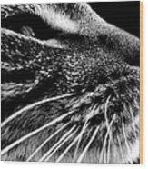 Saber Wood Print