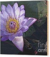 Sacred Lotus Wood Print