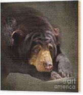 Sad Sun Bear Wood Print