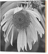 Sad Sunflower Black And White Wood Print