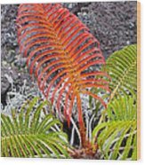Sadleria Fern Hawaii Wood Print