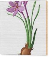 Saffron Flowers And Bulb Wood Print