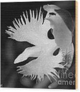 Sagi-so Or Crane Orchid Named Japanese Egret Flower Wood Print