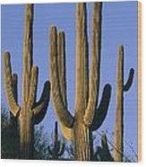 Saguaro Cacti In Desert Landscape Wood Print