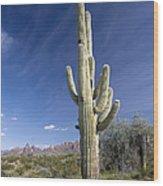 Saguaro Cactus (carnegiea Gigantea) Wood Print