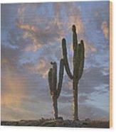 Saguaro Carnegiea Gigantea Cacti, Cabo Wood Print