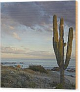 Saguaro Carnegiea Gigantea Cactus Wood Print